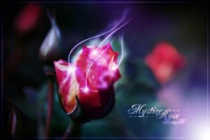 The Presence of the Mystic Rose