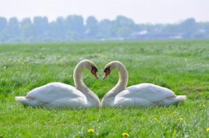 How Soul agreements are affecting our life (when your soulmate gets his wings)